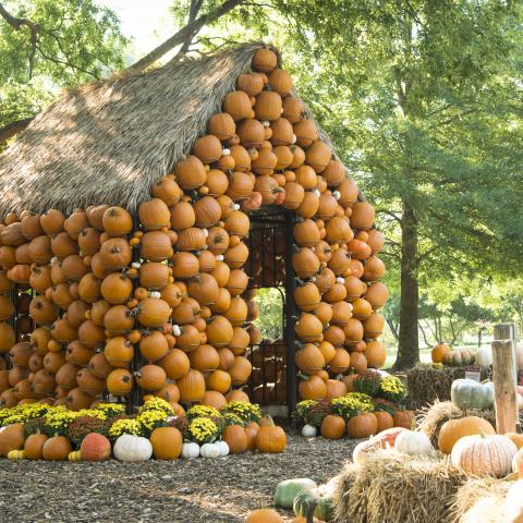 Pumpkin house at Cheekwood in Nashville TN