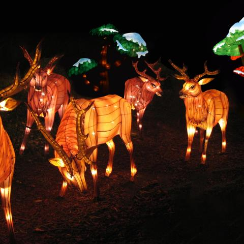Elk display for Zoolumination: Chinese Festival of Lights coming to Nashville Nov. 15, 2019-Feb. 2, 2020